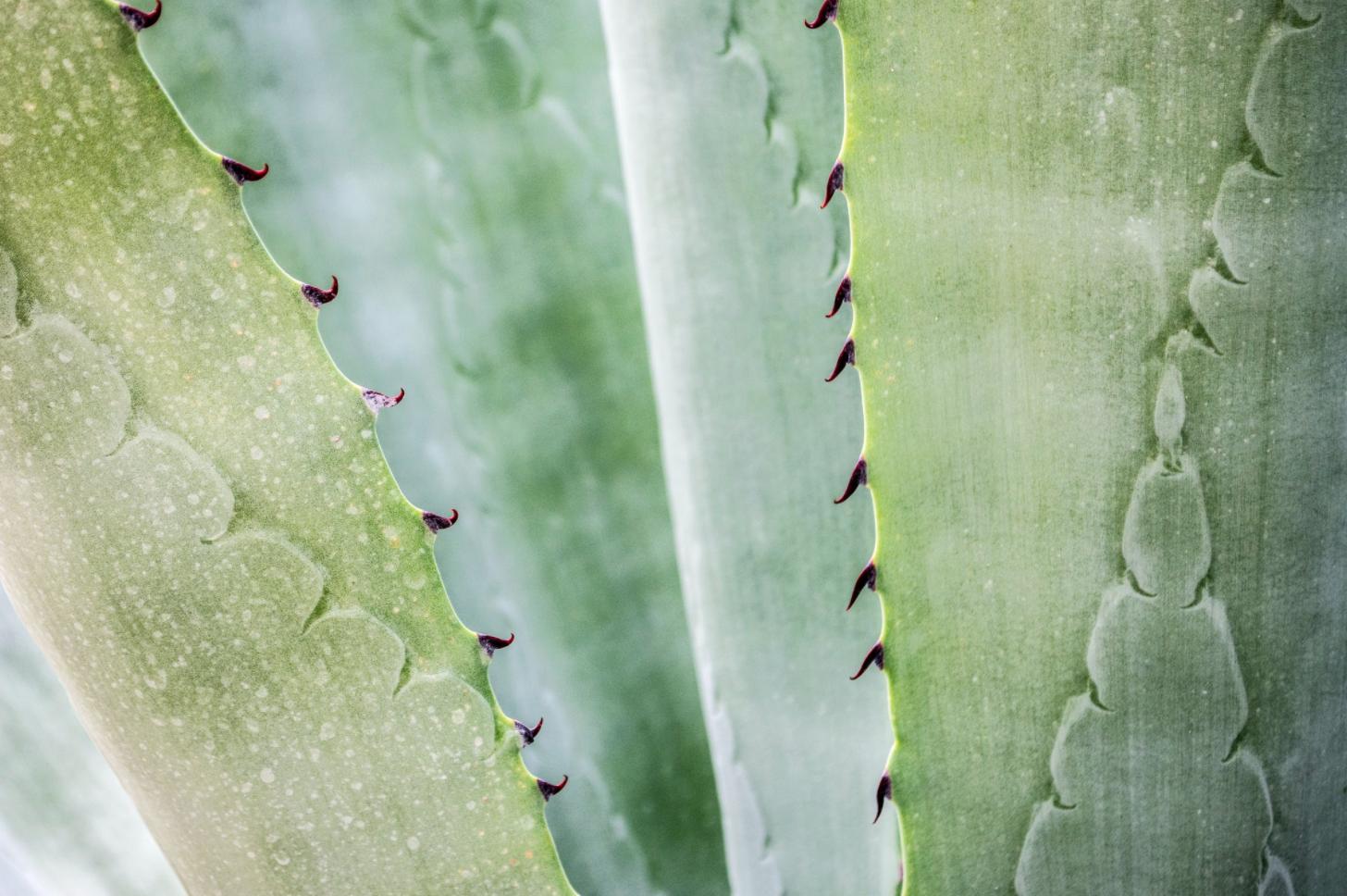 Aloe idratazione pelle