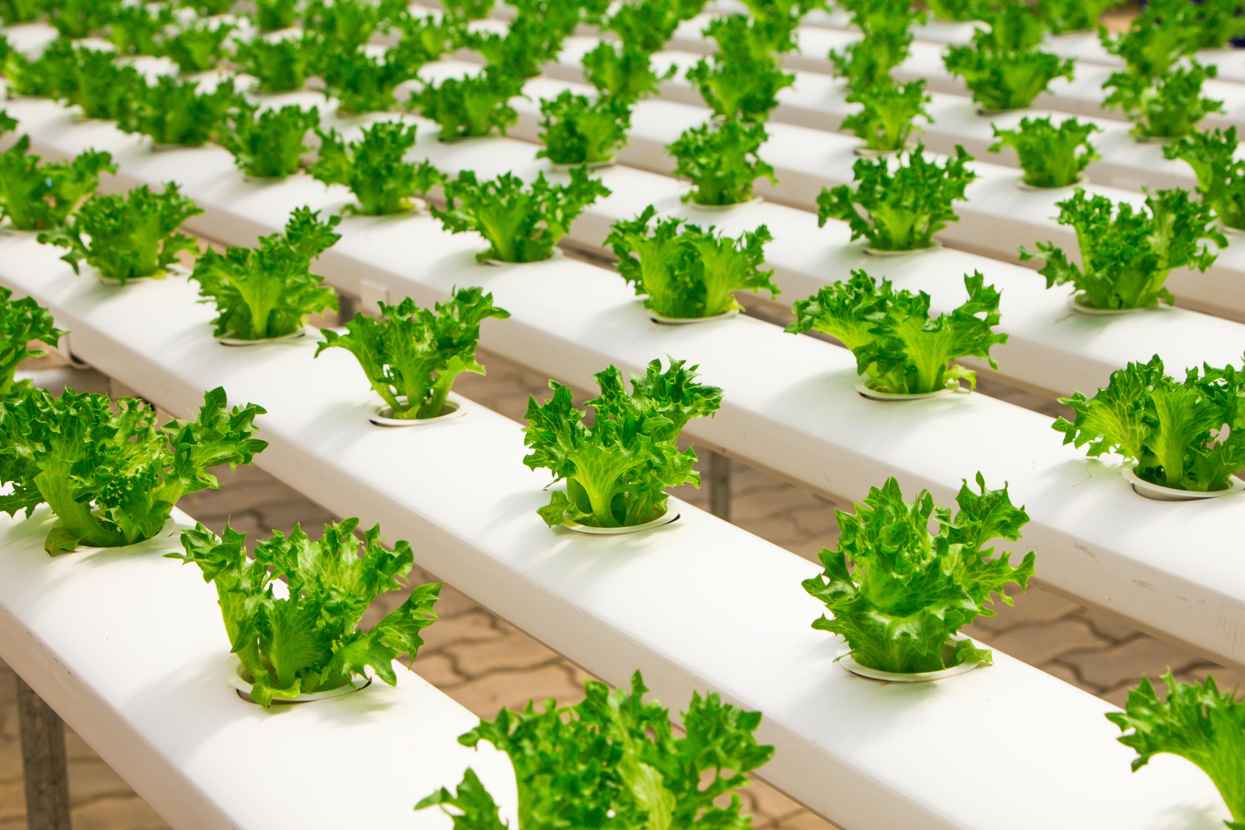 kit-indoor-garden-innovazione-coltivazione-idroponica